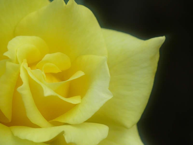 20061201-3.jpg